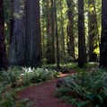 Via-Bike-Tours-Redwood-Trail
