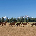 Cascade-Scenic-Sisters-Horse-Art