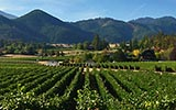Southern Oregon Wine Country Bicycle Tours